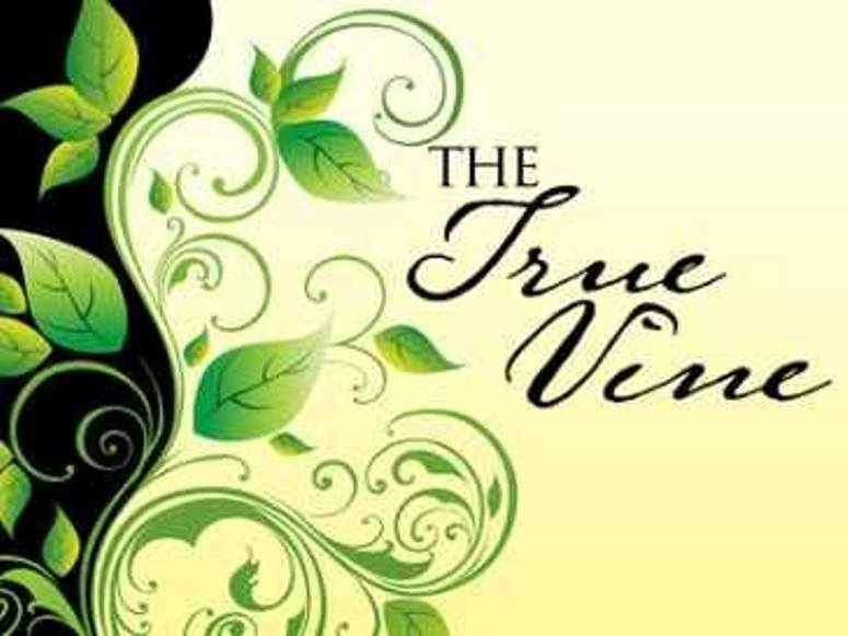 John 15 – Jesus Christ Is the True Vine