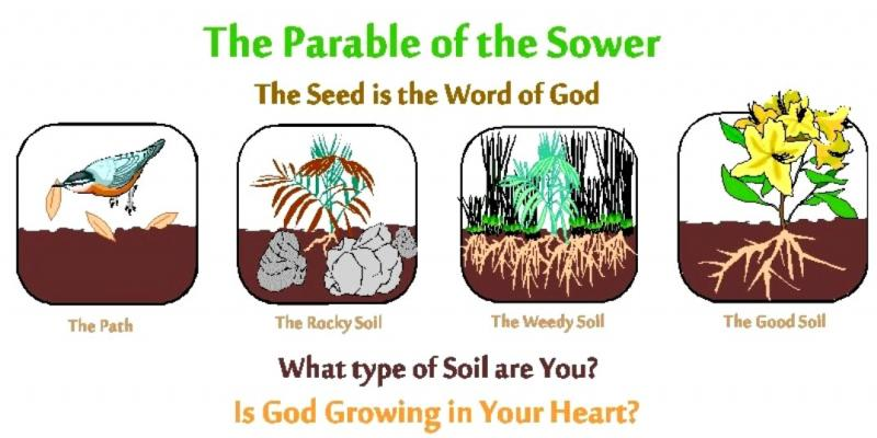 Luke 8a: Jesus Preached About the Kingdom of GOD and Jesus Told the Parable of the Sower.